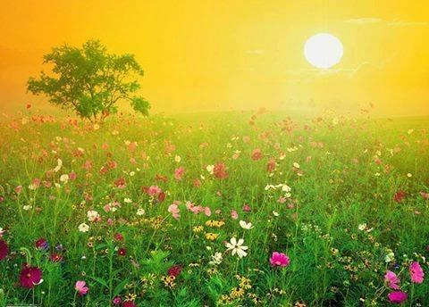 fleurs et lumière 1