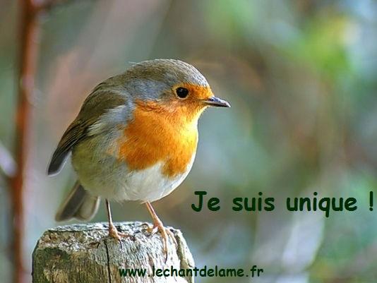 oiseau r